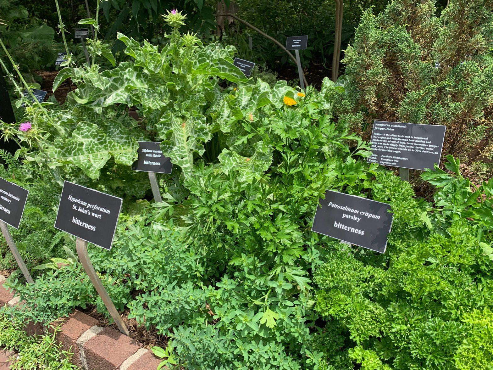 Growing Beer Garden Plants